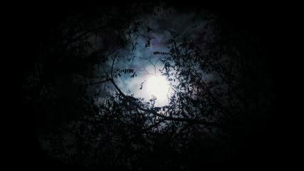 moonlight light trees leaves leaf freetoedit