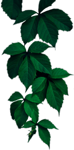 leaves leaf green greenleaf greenleaves freetoedit