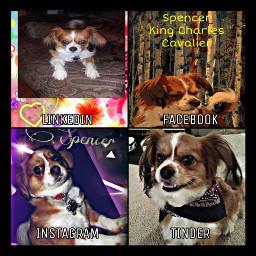 freetoedit spencer dog petsandanimals love rcsocialpetworks socialpetworks