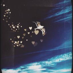 möve himml sky fliegen wings freetoedit
