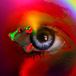 freetoedit myoriginalwork originalart frog eye ircmysteriouseye