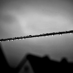 freetoedit blackandwhite raindrops hanging closeup