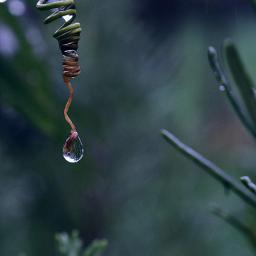 aftertherain waterdrops closeup adjusttool freetoedit