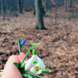 freetoedit flowers romania forest january