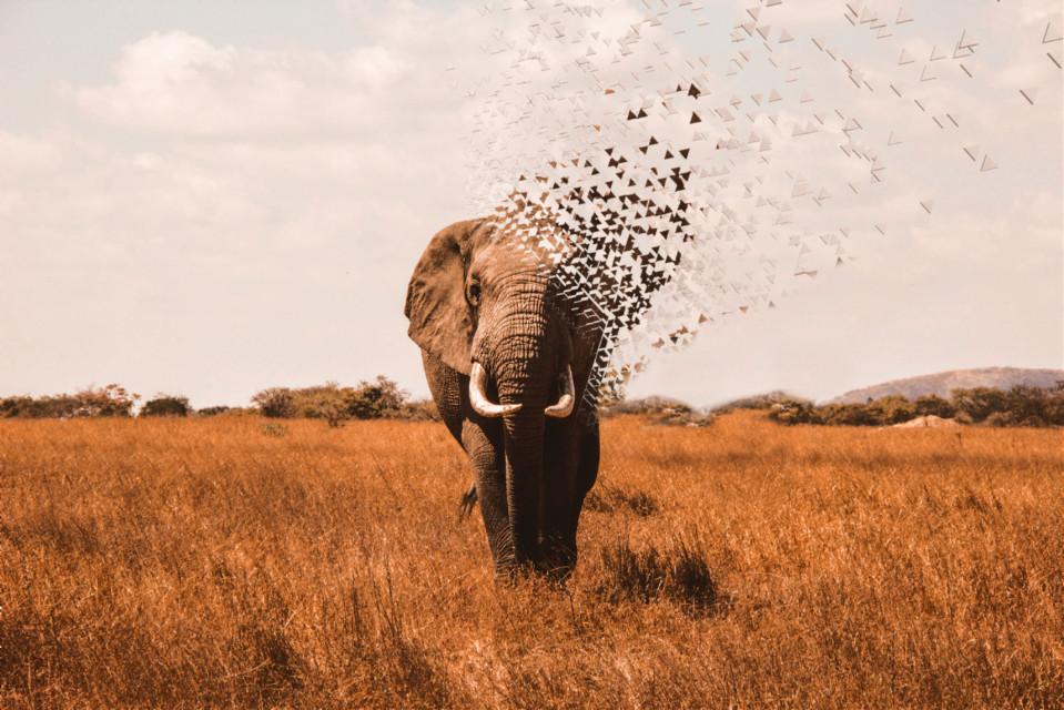 L'elephant est en voie de disparition....agissons tous..... #freetoedit