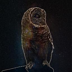 freetoedit owl neoneffect stars bird ircgalaxysky galaxysky
