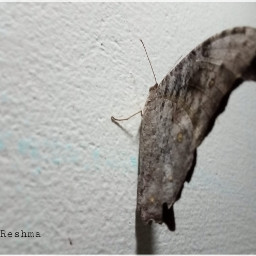 freetoedit butterfly photography home wall