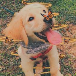 freetoedit butterflies ecneonswirls neonswirls neon
