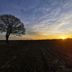 sunrise tree morningsky skyandclouds colourful freetoedit