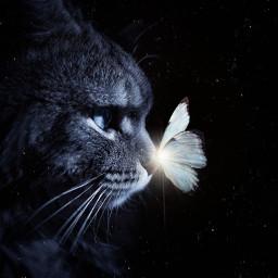 freetoedit cat cats blue butterfly
