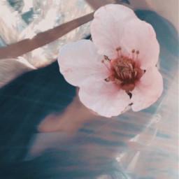flower flowerselfie edit picsart girl