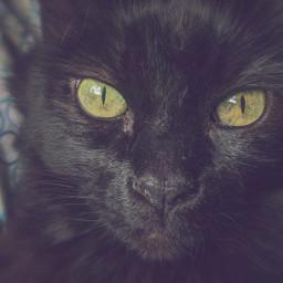 cat indie photo greeneyes  feb greeneyes