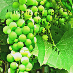 freetoedit green grapes vines growth day