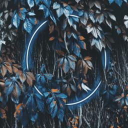 freetoedit neoncircle blue leaves colorsplasheffect