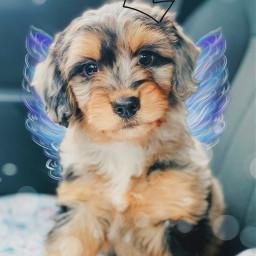 freetoedit puppy angel wing crown srcangelwings angelwings