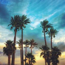 nature sunsettime eveningsky skyandclouds palmtrees freetoedit