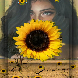 freetoedit day6 sunflower cool repost