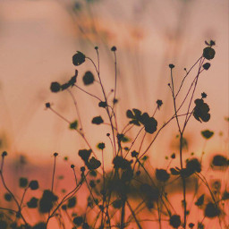 endoftheday sunsettime beachdunes wildplants grass freetoedit