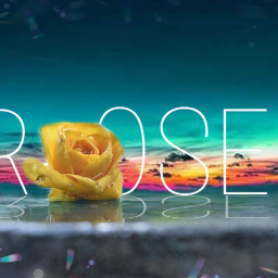 freetoedit roses rose rosesflower rosesarebeautiful