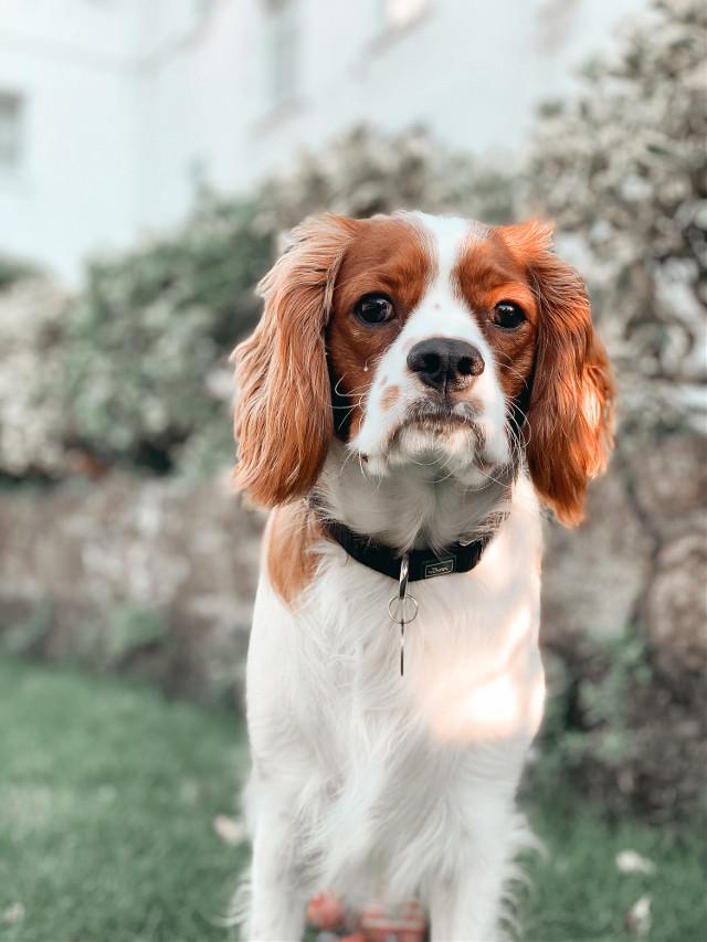 #freetoedit #dog
