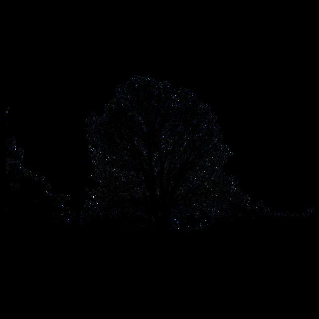 #شجرة