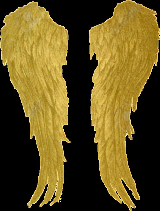 #gold #angelwings #sticker #freetoedit