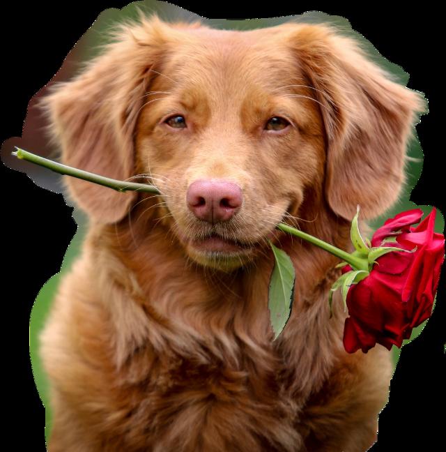 Is dog sticker i like dog #dog #sticker #dogsticker
