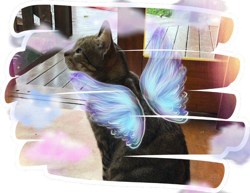 #freetoedit #cat #wings