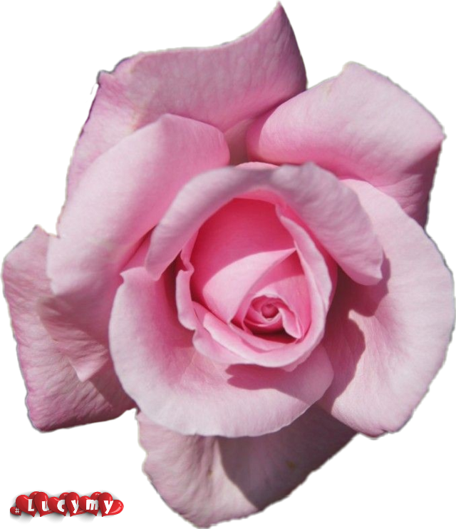 #NOremix #lucymy #rosalucymy #Pink
