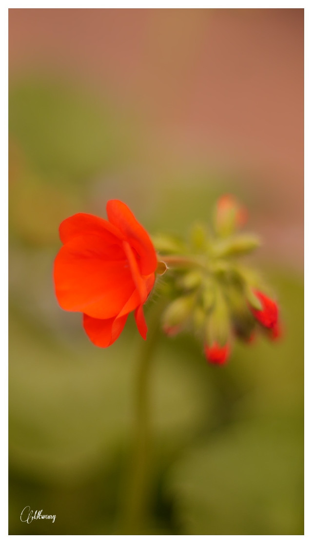 #flower#natural#photography