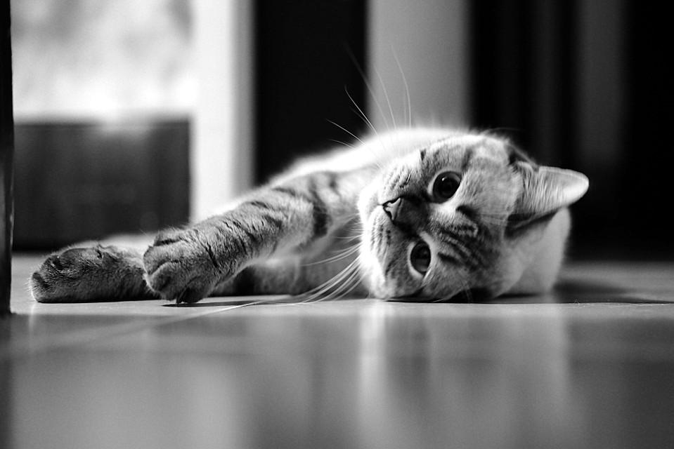 # Портрет ленивой кошки..