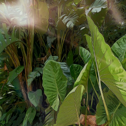 myphotography myedit nature leaves artisticeffects eclecticartist eclecticart