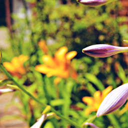 freetoedit flowers purple white greenery
