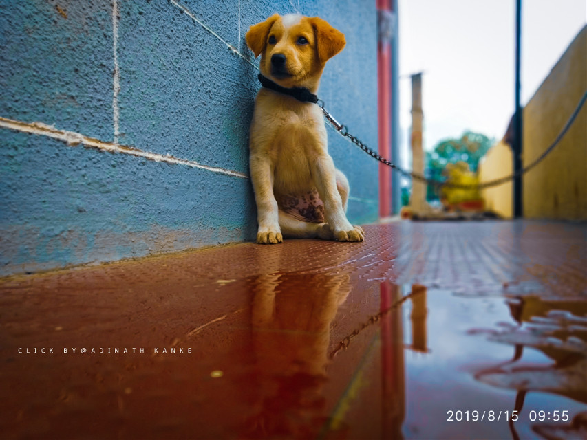 Dog click @adinathkanke #doglover🐕 #dogsofpicsart #picsart100million