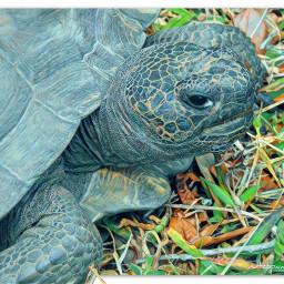myphotography wildlife tortoise tortoiseshell sideprofile