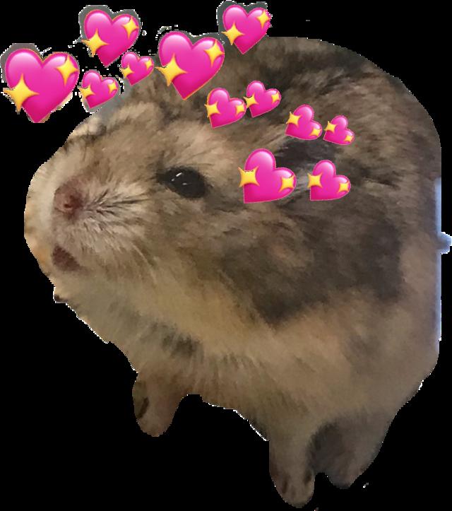 #freetoedit hamster