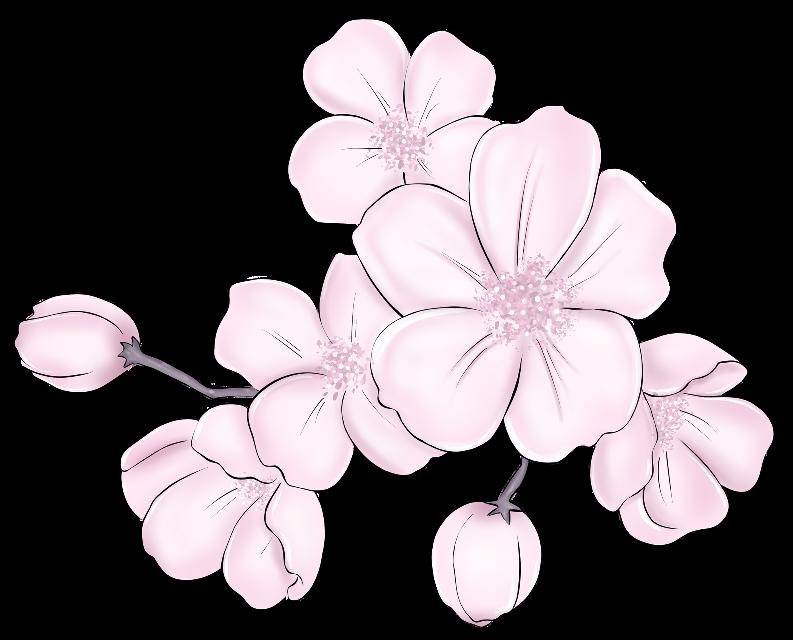 #cherryblossom #cherryblossomsafterwinter #pinkflowers #springiscoming #branch #flowerlover #buds #freetoedit