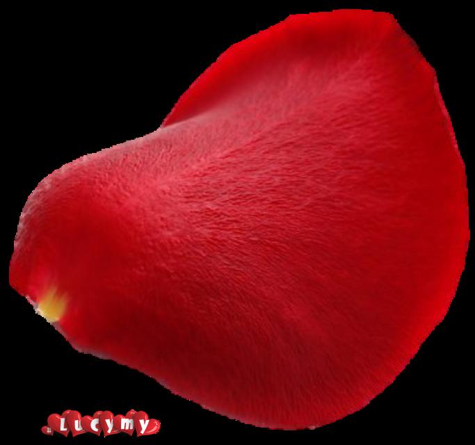#NOremix #lucymy #petalo  #petali #red #petaloLucymy #rosalucymy