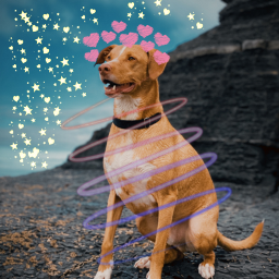 freetoedit dog heartcrown neonspiraleffect echeartcrowns heartcrowns