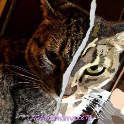 toon picsartchallenge paiting brushstroke cat ectoonifyyourpet freetoedit