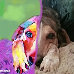 freetoedit colorful dogsofpicsart digitaldrawing digitalpainting toonifyyourpet