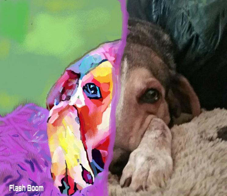 #freetoedit #colorful #dogsofpicsart #digitaldrawing #digitalpainting