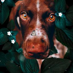 freetoedit creative imagination interesting picsart dog tumblr fantasy nature remixit remixed