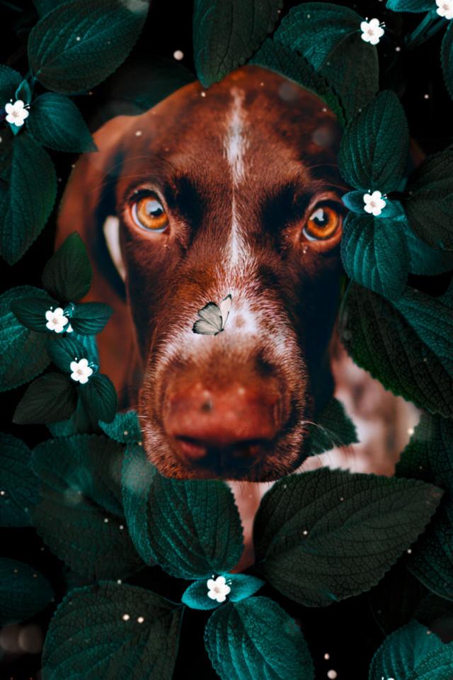 #freetoedit #creative #imagination #interesting #picsart #dog #tumblr #fantasy #nature #remixit #remixed