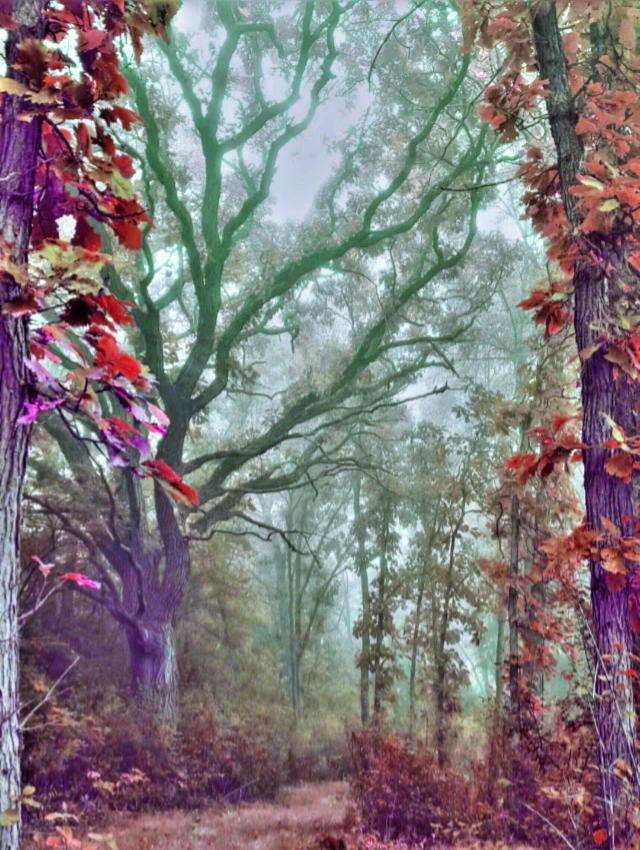 #freetoedit #landscape #forest#tree  Op@moonsun999   @picsart @freetoedit