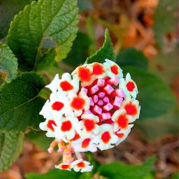nature flowerphotography naturalbeauty naturepatterns leaveslovers