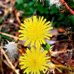nature flowerphotography naturalbeauty