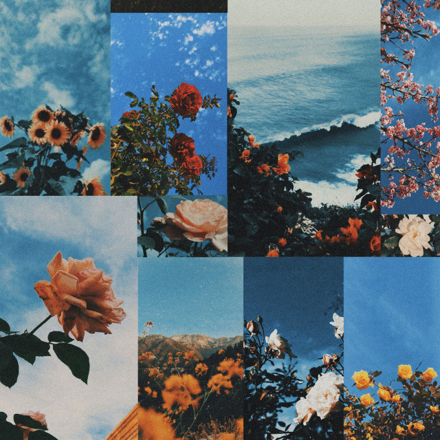 New collage  #freetoedit #aesthetic #aesthetics #retro #vintage #rose #roses #flower #flowers #plant #plants #photography #nature #grass #wildlife #garden #flowery #collage #blue #sky #cloud #clouds #sea #flowercollage