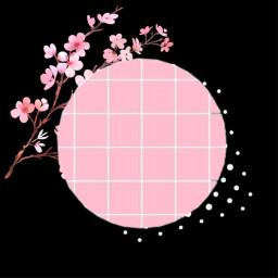 freetoedit kpop aesthetic grid cherryblossoms