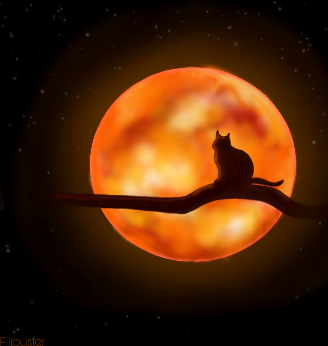 #freetoedit #moon #cat #sun #night